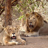 Gujarat Wildlife Tour I (14Nights / 15Days)