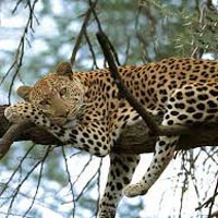 Gujarat Wildlife Tour - Ii (10N/11D)