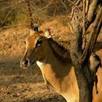 Wildlife & Beach Tour Of Gujarat (4Nights / 5Days)