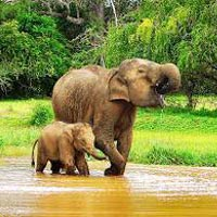 Sri Lanka 3 Nights/04 Days Package