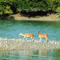 best sunderban packages