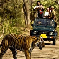 Nainital With Corbett Wildlife Safari