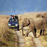 Mussoorie with Corbett Wildlife Safari