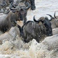 Kenya wildlife Masai Mara holiday Trips Tour
