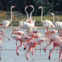 Wildlife Tour with Gujarat