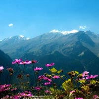 Manali Volvo Package Holiday