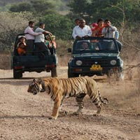 Ranthambore Package