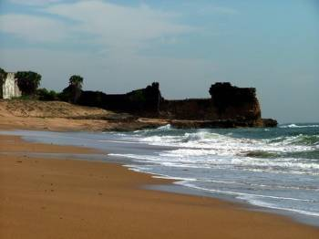 Wildlife & Beach Tour of Gujarat
