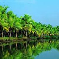 Kerala Cochin Tour
