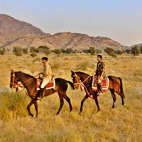 Marwari Horse Safari Tour