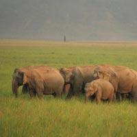 Splendour of Uttaranchal Tour