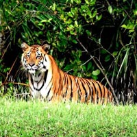 Sundarbans Tiger Tour