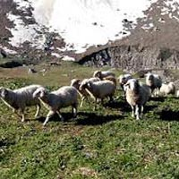 Chandarnahan Lake Trek (Pabbar Valley) - Shimla Tour
