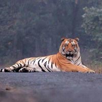 Maharashtra TADOBA & UMRED KARANDLA 3N/4D Tour Package