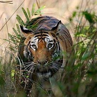 3D/2N Tipeshwar wildlife tour package