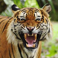 2Night/3Days Weekend Tadoba Tour