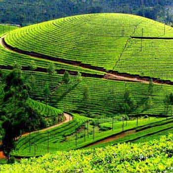 Short Trip to Kerala Tour