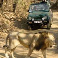 Wildlife Safari in Gujarat Tour