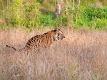 Jungle Book – Assam Wildlife Tour