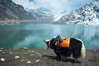 Simple Great Darjeeling - Gangtok Tour