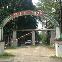 Manas - Reserved Tiger Forest