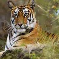 Rajaji National Park with Rishikesh and Haridwar Tour