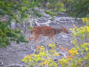Sundarban Package Tour 2 Days