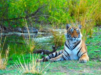 Flora and Fauna of Rajasthan Tour