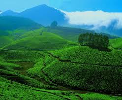 Splendid Assam Tour