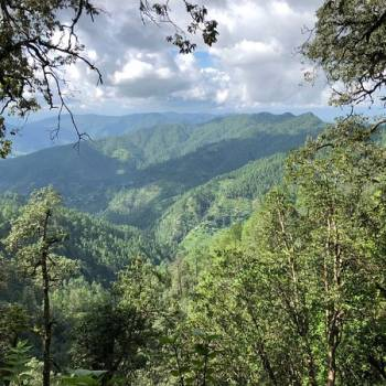 Binsar Bird Watchers, and Nature Lovers Tour  Package