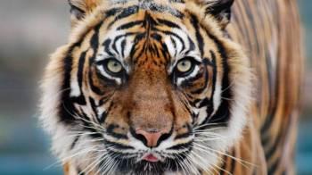 Indian Tiger with Khajuraho & Agra Tour