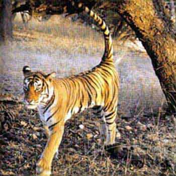 Discover Wildlife India Tour