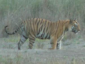 India Tiger Trail Tour