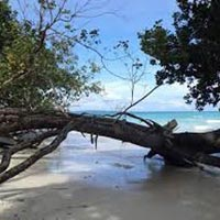 Andaman Tour - Baratang Excursion