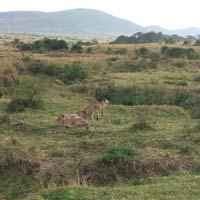 4 days masai mara and Lake nakuru luxury safari Tour