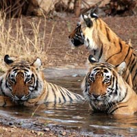 Corbett Safari Tour