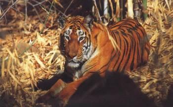 All Assam Wild Life Tour