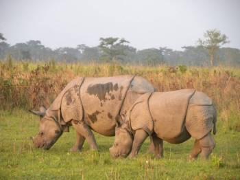 Kaziranga Wild Life Safari Tour