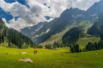 Srinagar, Gulmarg, Pahalgam and Sonamarg 5 Days Tour