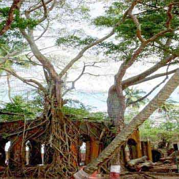 Andaman and Nicobar Tour