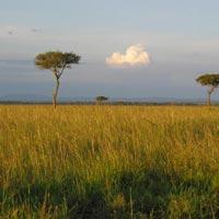 Lake Nakuru & Mara Tour