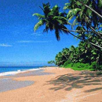 Goa Monsoon Bonanza Trip