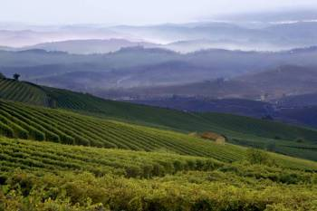 Piedmont: Wines,Castles and Maggiore Lake Tour