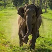 Short Escape to Bandipur National Park Tour