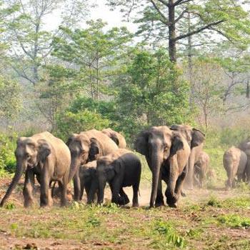 Meghalaya-Assam 8 Days Tour Package