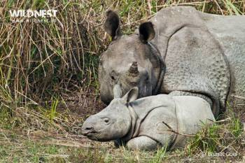 1 Day Kaziranga Tour