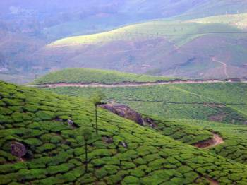 Kerala - Plantations and Backwaters Packages