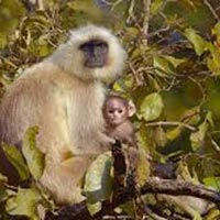 Best Of Wildlife ( 17 Days - 16 Nights ) Back to Tours