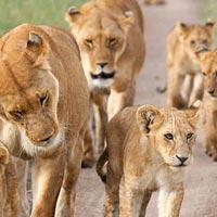 3 Days Maasai Mara Game Reserve Tour