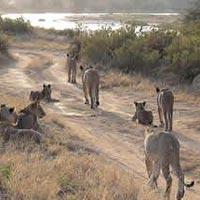 3 Days Samburu Game Reserve Tour
